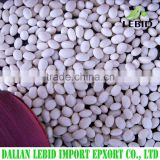 2016 Crop small size white kidney beans navy beans
