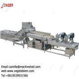 Industrial Vegetable Washer|Fruit Washer Machine Price|Dates Processing Plant Manufacturers|Dates Washing machinery