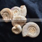 Precious High Quality Natural Ammonite Fossil Snail For Sale Gift Ornaments