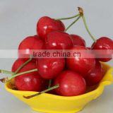 import china products fresh cherry high quality bagged