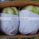 NEW CROP FRESH CHINESE CABBAGE