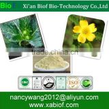 Sex Medicine Herbal Extract Natural Damiana Leaf Extract Powder 10:1 20:1 Water Soluble