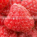 2014 new crop frozen Heritage raspberry