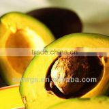 Factory Direct Sale Avocado Oil Essential Oil Bulk
