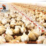 Salvador Poultry Farm Equipment Broiler Floor Raising System & Chicken Deep Litter System with Automatic Drinking& Feeding System in Chicken Shed