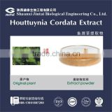 water soluble 10:1 20:1 houttuynia cordata extract powder