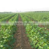 Agrochemical insecticide Emamectin Benzoate made in China