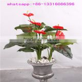 China manufacturer artificial flower bonsai plants cheap artificial anthurium plant