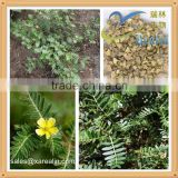 Flavouring Raw Material Tribulus Terrestris Seed Extract Powder 90%, Condiment Tribulus Terrestris Extract