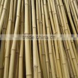 WY-179 For trees supporting natural eco-friendly high quality bitter bamboo poles and bamboo stakes bamboo sticks