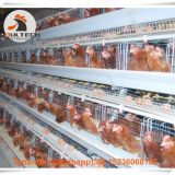 Chicken Farm Automatic Egg Hen Chicken Cage & Layer Cage & Hen Cage with 90-200 birds in Chicken Shed Sale in Libya