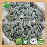 GWS Pumpkin Kernels raw cashew nut wholesale