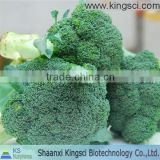 GMP Manufacture Pure Natural Broccoli Seed Extract Powder KS-24