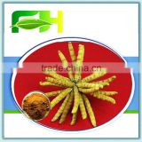 Medicinal Fungus/ Function Food Supplement Cordyceps Sinensis Polysaccharide As Immunity Enhancer