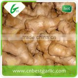 Chinese mature fresh ginger root wholesale price