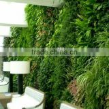 2015 hot sale Artificial Plant Wall for indoor&outdoor Decor,artificial grass wall