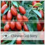 China New Fresh Goji Berry Plants