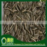 Sun flower Seeds American Type 5009 24/64 From Inner Mongolia