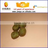 Plastic kiwi fruit/kiwi berry for sale/small craft fruit kiwi for kids play