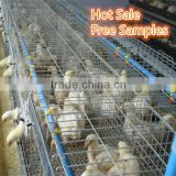 chicken wire used in chicken farm /china supplier for high quality and cheap fence /aluminum chicken wire