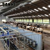 Cheap Prefab steel frame dairy Cowshed cattle house farm shed structures construction