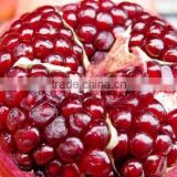 Fresh fruit export for egypt