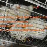 Yemen Poultry Chicken Farm A Frame Battery Broiler Cage Chicken Coop Equipment with Automatic Feeding & Drinking System