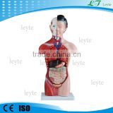 XC-202B 42CM 15 Parts human female plastic Torso model