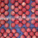 2014 New Crop fresh Fuji Apple, sweet red Fuji Apple Fruit From yantai,gansu /shanxi China
