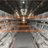 Guyana Poultry Farming Equipment - A Type Battery Broiler Chicken Cage with Automatic Chicken Manure Clean Machine