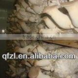 Mushroom Cultivation Unit for King Oyster