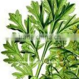 100% Pure Natural Wormwood Essential Oil(Artemisia absinthium)