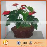 The latest products flower home Nutrient organic potting soil