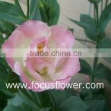 New Wedding Bouquet Excellent Quality Eustoma Flowers Hobby Lobby Wholesale Flowers From Yunnan