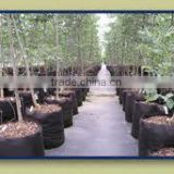 non woven Plant pot for Transplant trees wholesale smart grow bags Grow bags smart non woven plant bag (1 gal to 1200 gal)