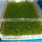 Hydroponic Animal Fodder Planting Machine / Hydroponics Farming Unit / Greenhouse Hydroponic Growing Systems                                                                         Quality Choice