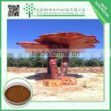 Manufacture Products Natural Ganoderma Lucidum Extract 40% by HPLC