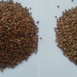 supply Chinese roasted buckwheat kernel