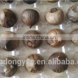 garlic supplier for natural garlic, solo garlic, black garlic, peeled garlic, garlic flake