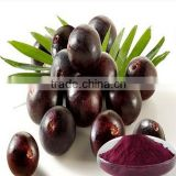 Acai berry extract / euterpe oleracea extract / Brazil Berry Extract