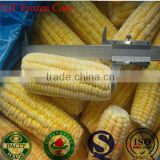 Wholesales IQF vegetables iqf frozen sweet corn