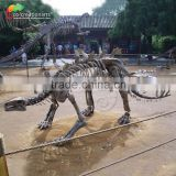 High Quality Dinosaur Fossil and Dinosaur Skeleton For Museum /Life Size Dinosaur Skeleton