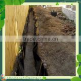 Plastic sheet Root Barrier 60cm X 6m
