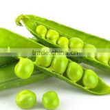 Agriculture products magic bean seed