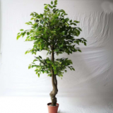 artificial bonsai banyan tree plant for decoration