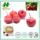 High Quality Hawthorn Berry Extract, Crataegus Pinnatifida Bge., Flavones