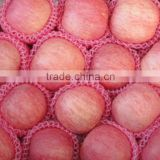 2014 Crop Chinese fresh Red fuji apple in hot sale