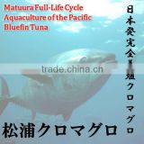 Matsuura bluefin tuna freshness is better than bluefin tuna caught in tuna fishing boat. (Fresh tuna)