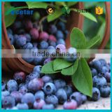 Best selling products cloudberry extract Vaccinium ulrtillus powder extract