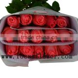 Newest big bud rose flower high quality rose flower diana for wedding decoration from kunming